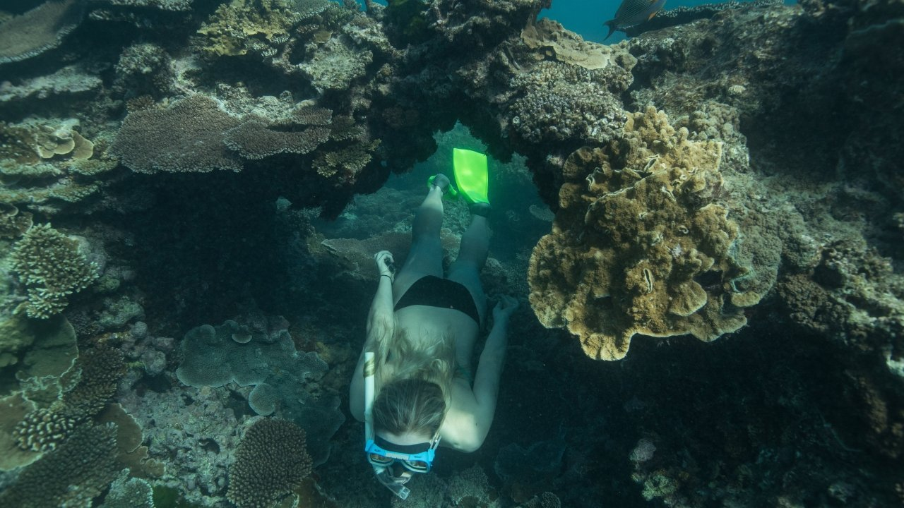 A person swims through a coral arch in the Great Barrier Reef