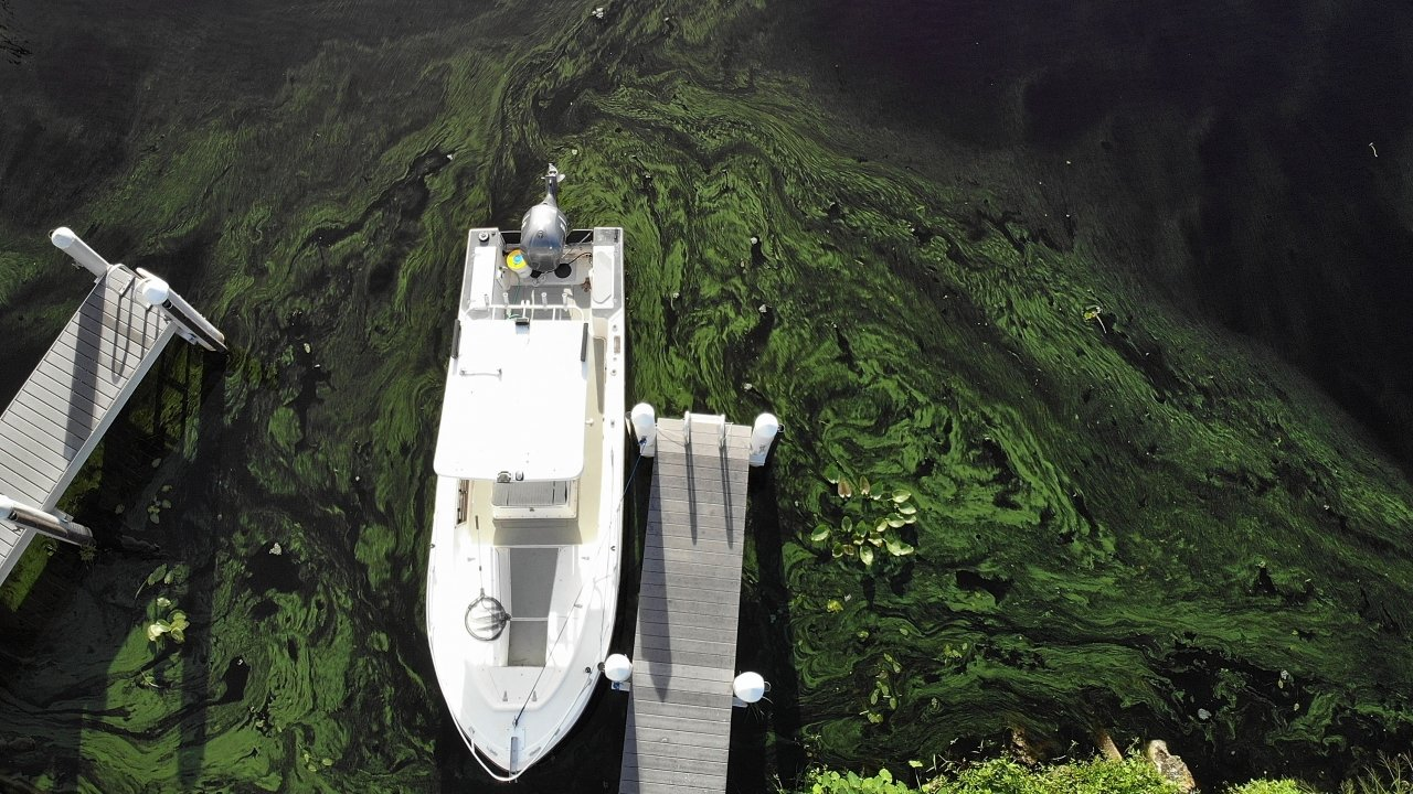 Green algae blooms in a lake