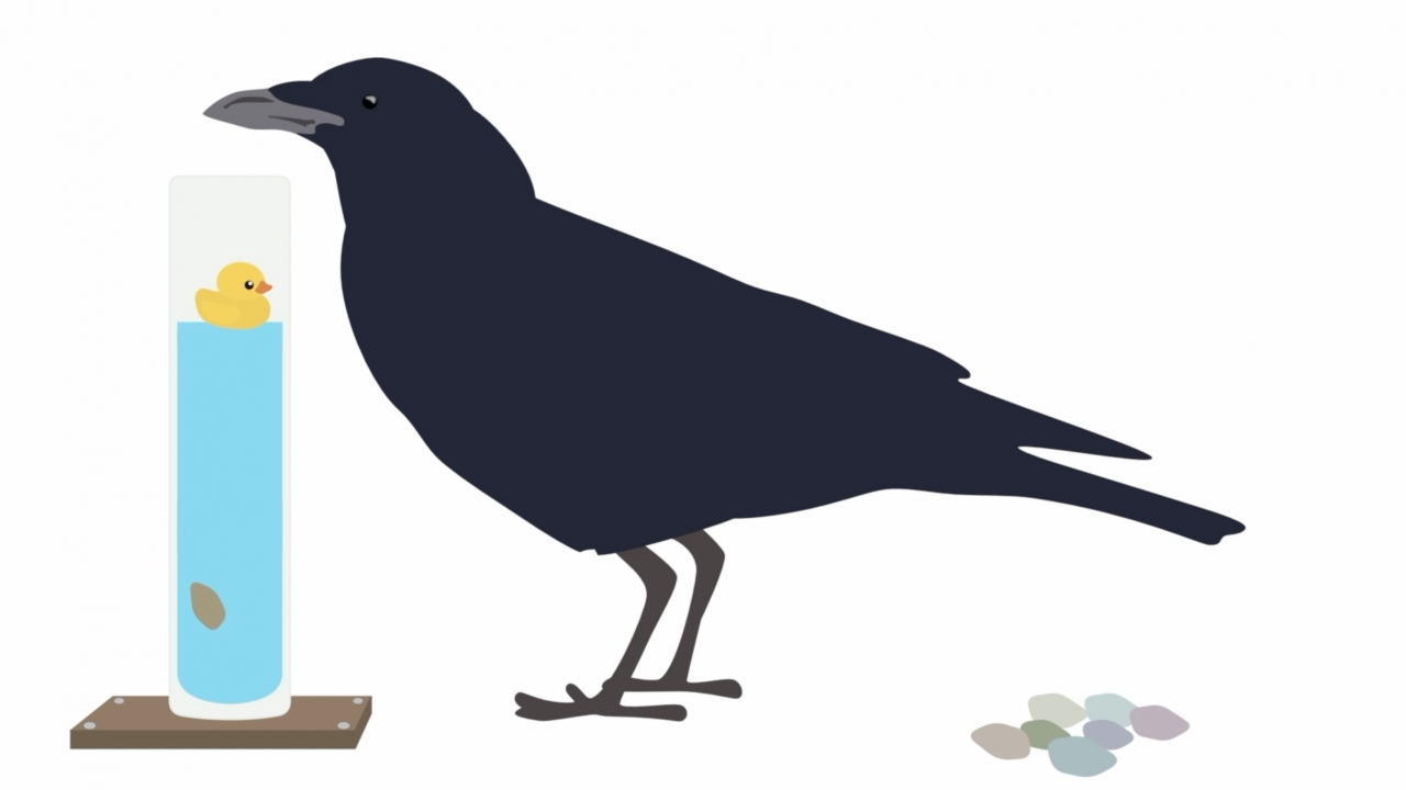 Crow graphic