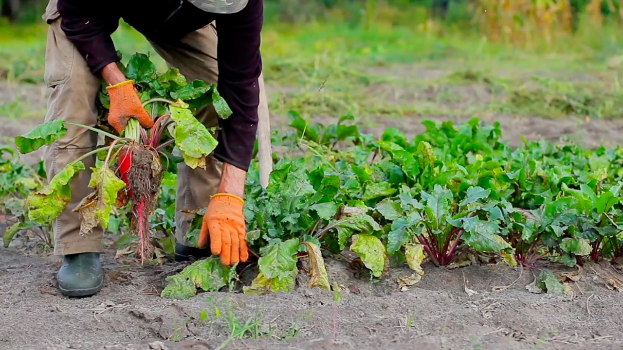 How Far Can Urban Farming Go To Solve Food Insecurity?