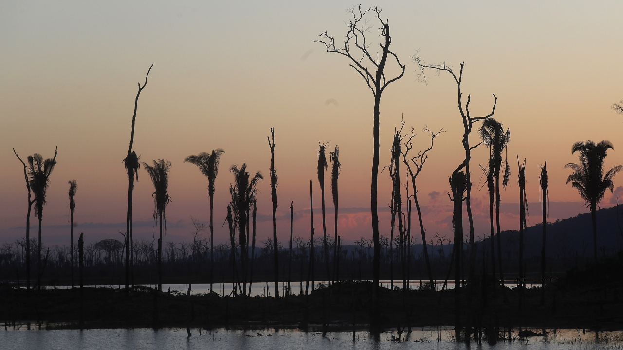 Dead tress leftover in a deforested section of the Amazon rainforest.