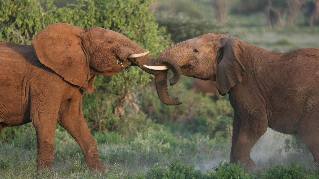 Wildlife Treaty Group Rejects 4 African Countries' Bid To Sell Ivory