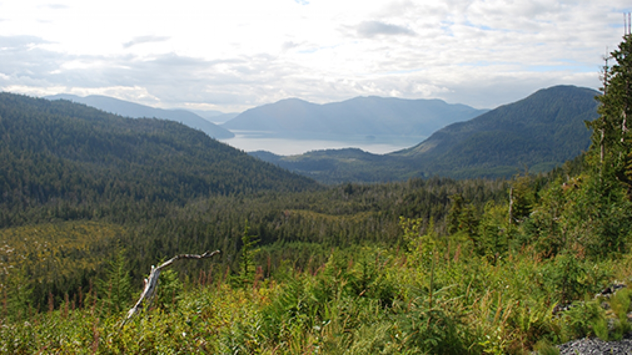 Central Tongass landscape project area in Tongass National Forest