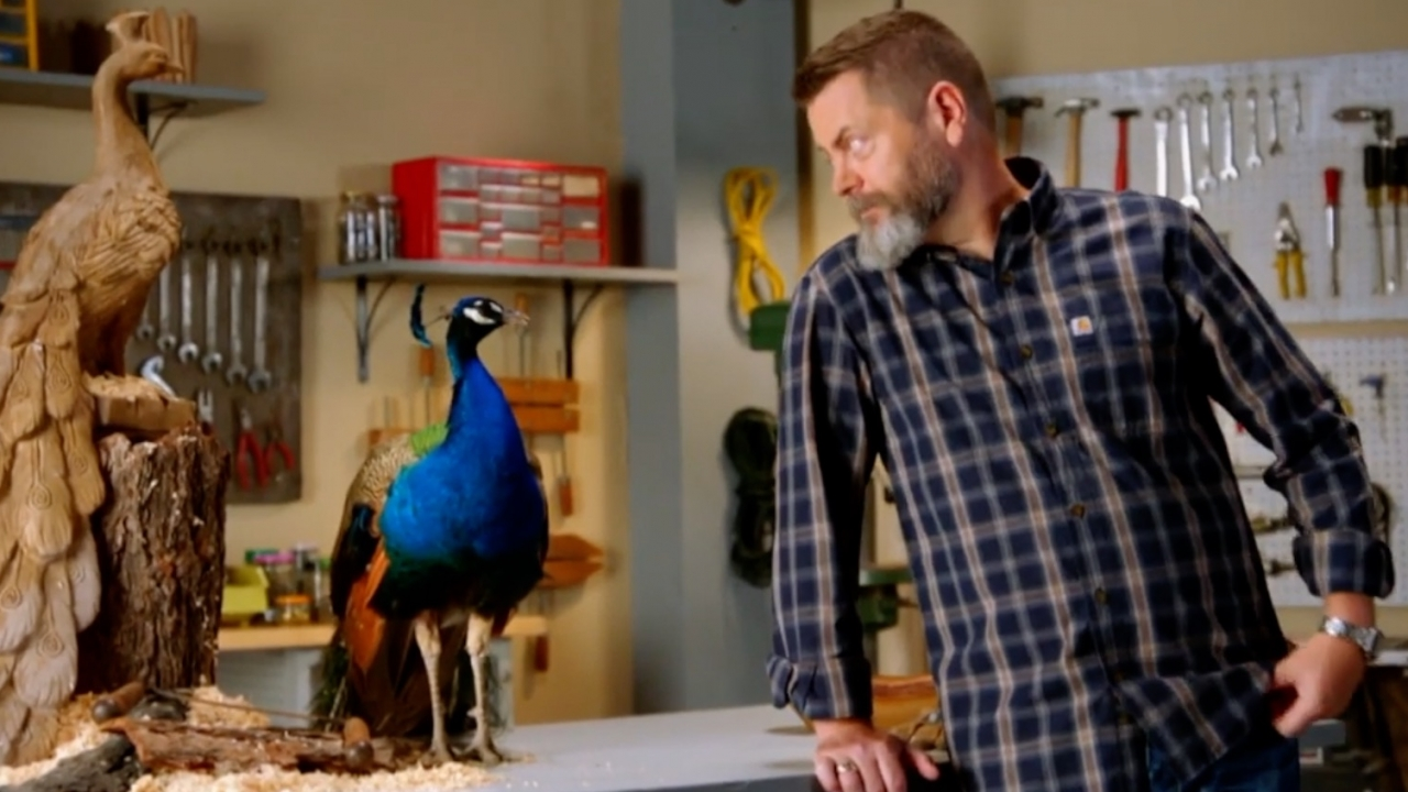 Nick Offerman stares at peacock